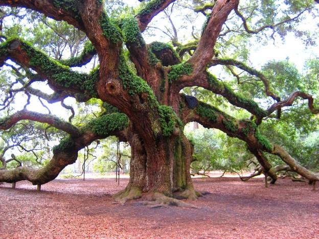 big-tree-624x468