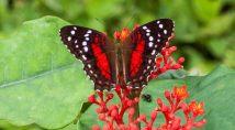 butterfly93.jpg