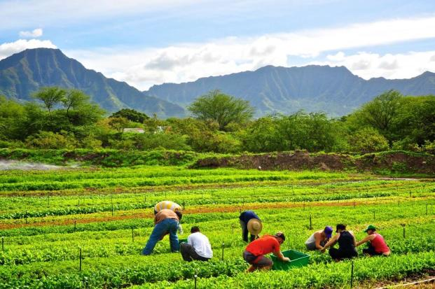 Oahu-Organic-Farms.jpg