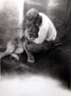 robert-stilson-lion