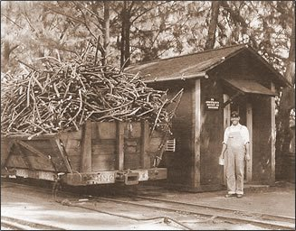 Sugar-Cane-Weighing-Station