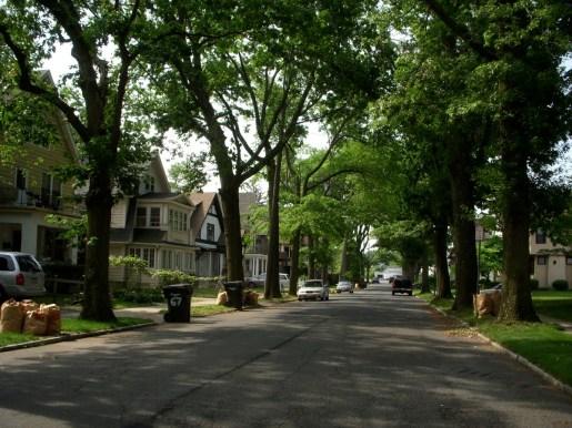 Tree-lined-street.jpg