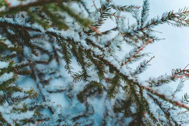 macro photography of tree branch
