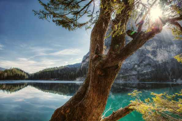 landscape photography of tree and sea