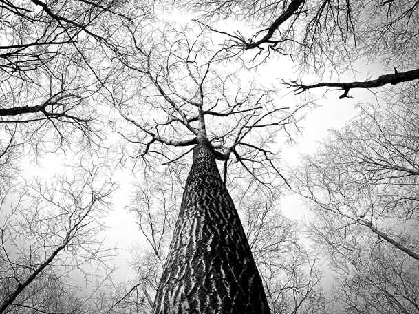 black and white branches tree high