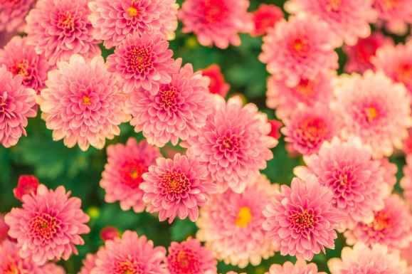nature flowers summer garden