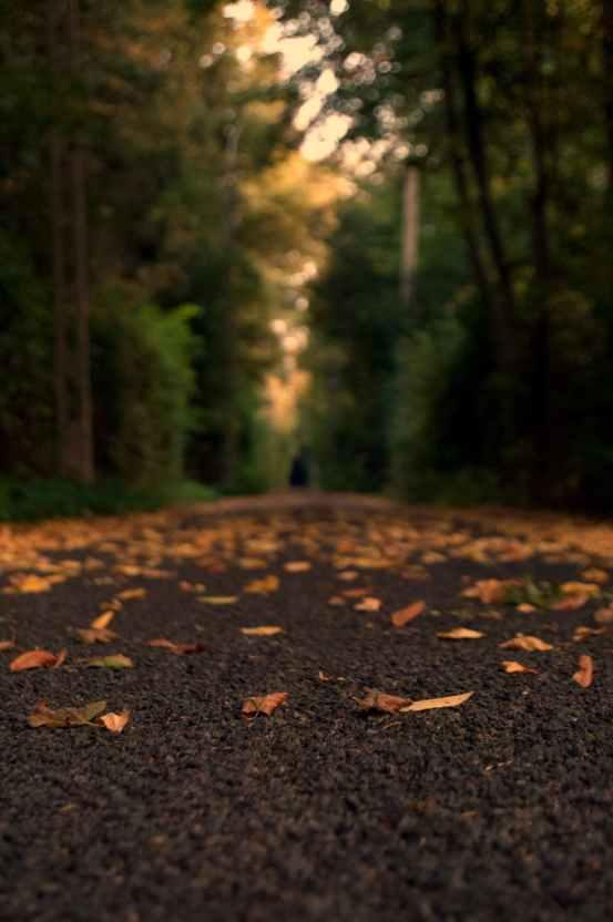 macro photography of pathway