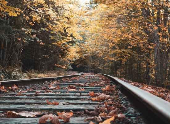eye level photo of train tracks surrounded with trees
