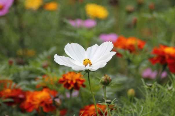nature flowers plant blossom
