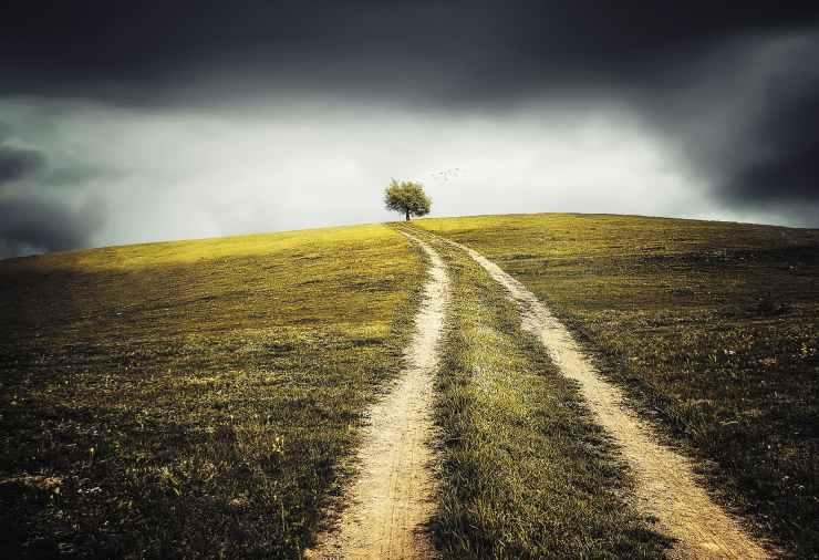 healthy landscape heart field