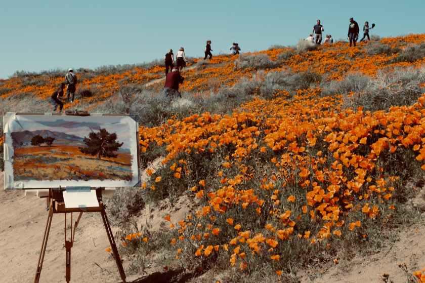 people walking on orange flower field