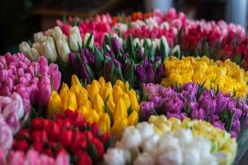 blossom bouquet bouquets colors