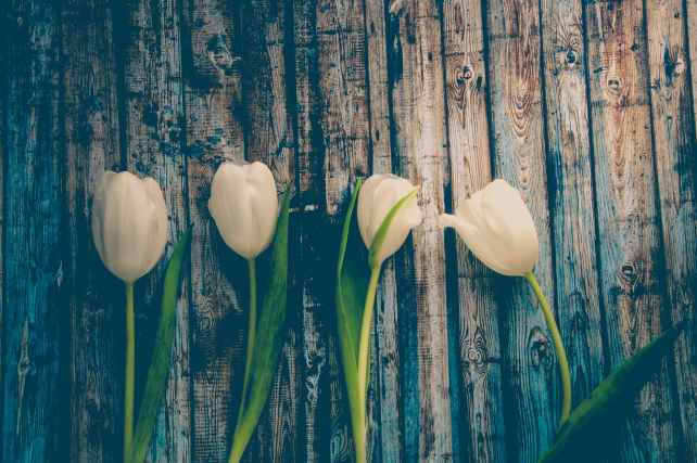 bloom blossom flora flowers