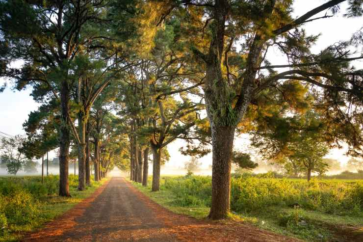 photo of dirt road surrounded by trees