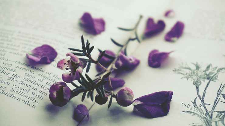 purple petaled flowers on opened book