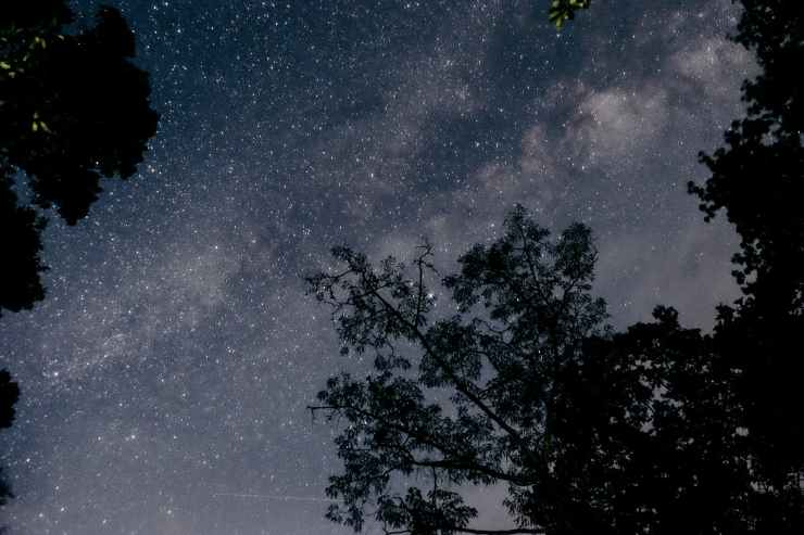 silhouette of trees under clear night sky