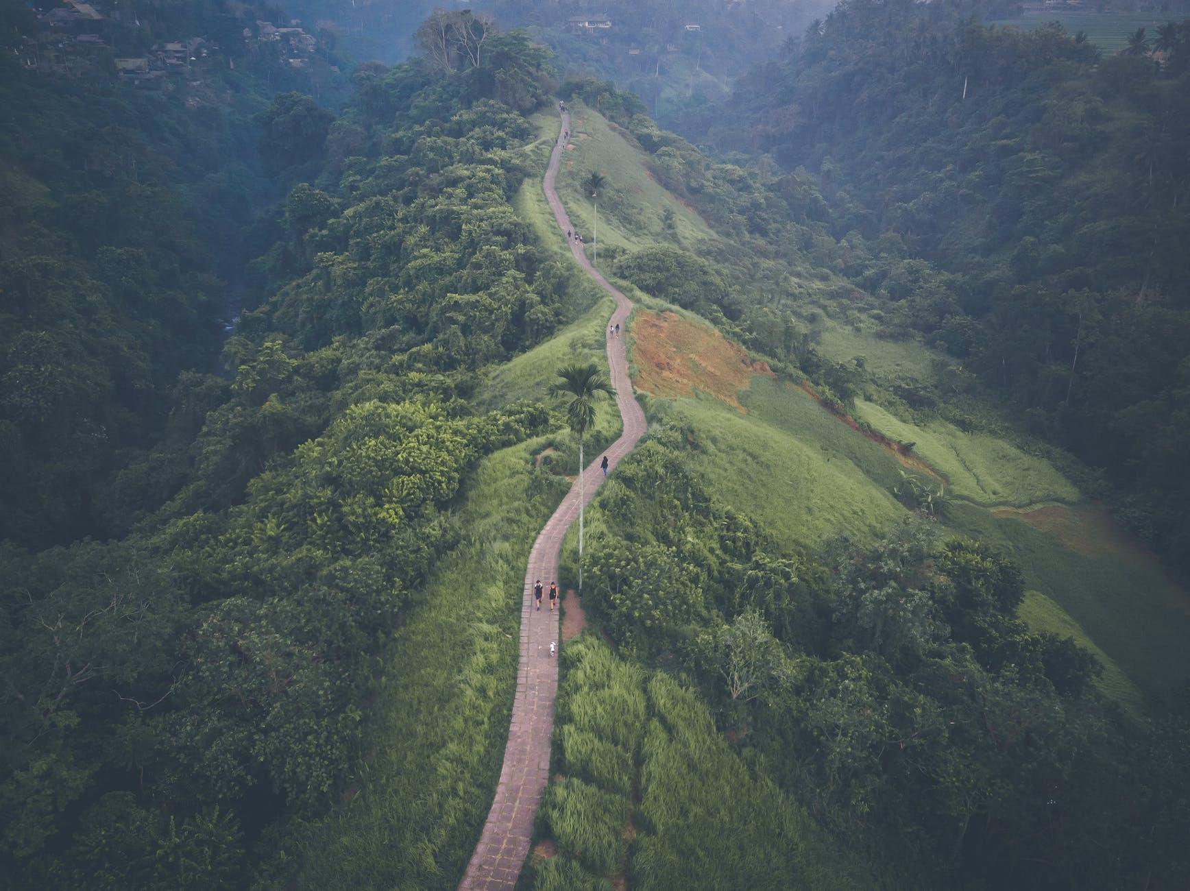 bird s eye view of path