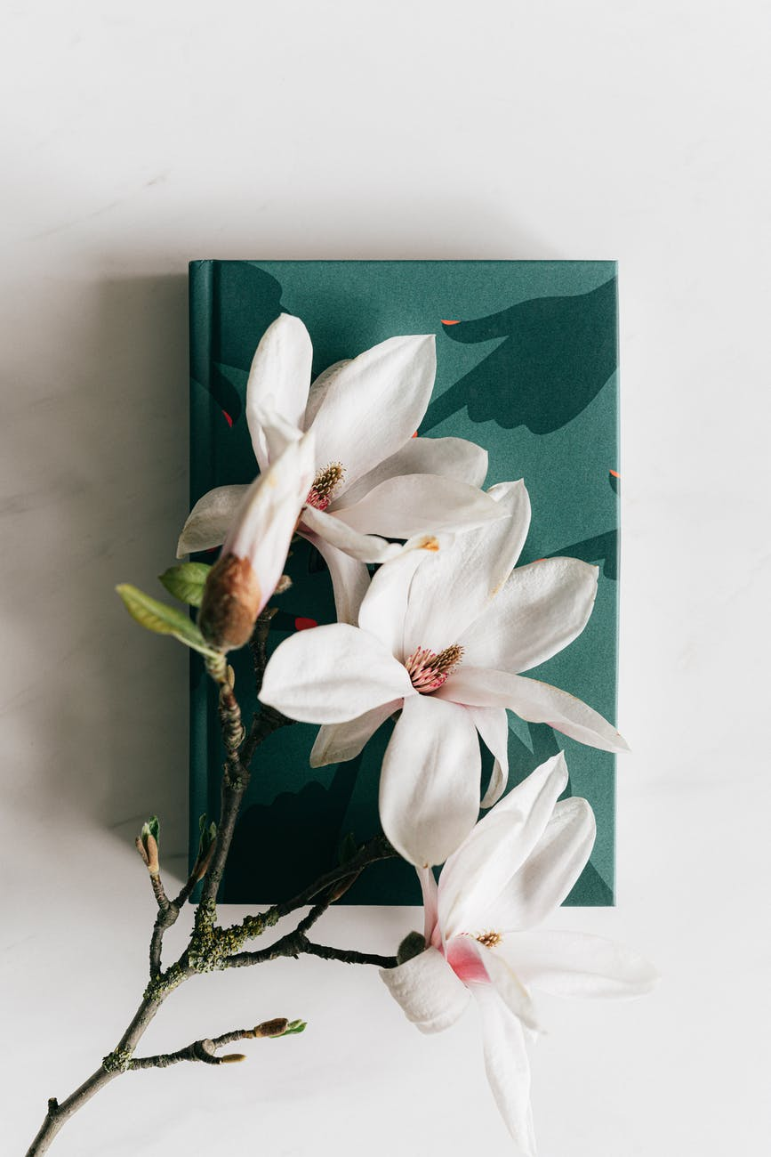 fresh magnolia flower on green diary