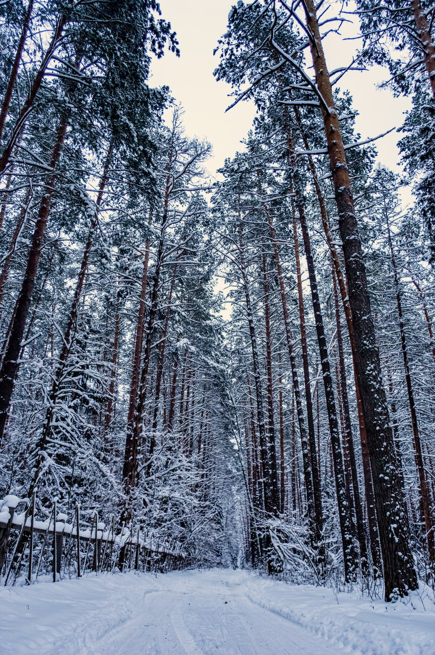 narrow footpath through snowy winter forest