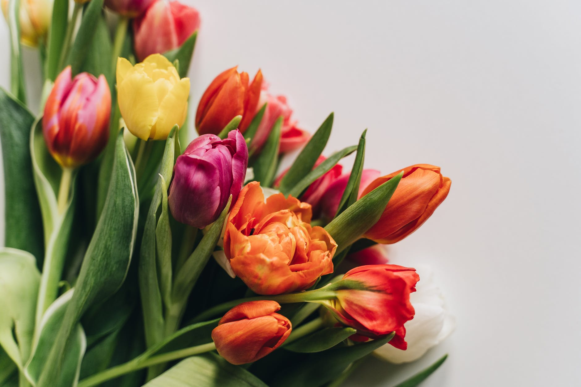bunch of multicolored tulips placed on white table